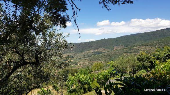 Organika a Cortona, una bella sorpresa